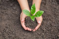 Child hands holding and caring a young green plant, Seedlings are growing from abundant soil, planting tree, reduce global warming. Growing a tree, love nature stock images