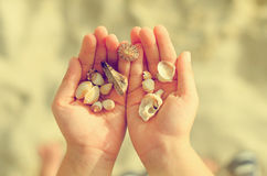 Child Hands Holding Sea Shells. Royalty Free Stock Photo