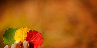 Child hands holding a three colorful autumn leaves. Autumn background banner. Stock Photos