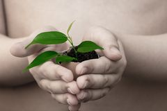 Child in hands holds a plant royalty free stock photography