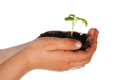 Child hands with little plant Royalty Free Stock Photos