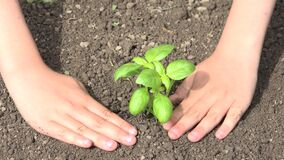 Child Hands Planting Seeds in Ground, Kid Gardening, Seedling, Agriculture Field
