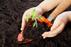 Child hands protecting seedling Stock Photo