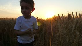 The child happily tears off the ears of wheat in a field at sunset