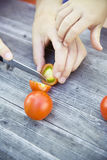 Child harvest fresh bio tomato Royalty Free Stock Photography