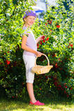 Child harvesting berries in garden from bush Stock Photos