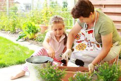 Child helps by replanting. Elderly women and child replanting flowers for better growth Royalty Free Stock Photos