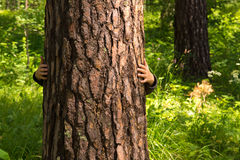 Child higging pine (tree) Royalty Free Stock Images