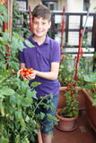 Child in his urban garden with red tomatoes Stock Photos