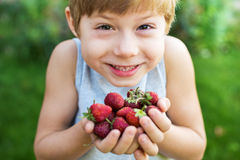Child Hold Fresh Strawberry Seasonal Berry. On Green Summer Background Stock Photography