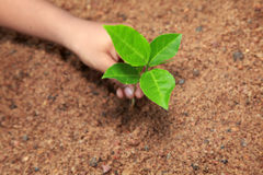 A child hold and preserve a young plant. A child holding a plant sapling Stock Images