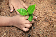 A child hold and preserve a young plant Stock Images