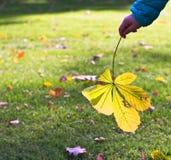 Child holding autumn leaf Stock Images