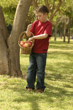 Child holding a basket of apples stock images