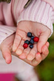 Child holding berries Stock Image