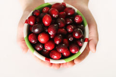 Child holding a bowl of fresh cranberries Stock Photography