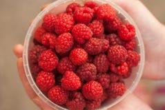 Child Holding Bowl of Fresh Raspberries. Ready to Eat Stock Photos