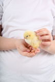 Child holding a chicken Royalty Free Stock Photography