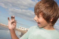 Child holding a crab. Happy little boy holding a baby crab Royalty Free Stock Photos