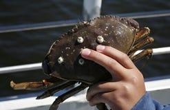 Child holding crab Stock Photos