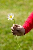 A child holding a daisy in his hand Stock Photography