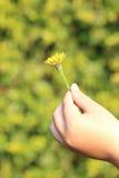 Child Holding Dandelion Flower Stock Photography