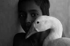 Child holding a duck Stock Image