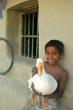 Child holding a duck Royalty Free Stock Images