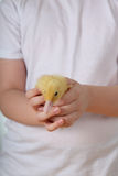 Child holding a duckling Royalty Free Stock Photo