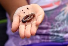 Child holding earth worm  Stock Image
