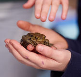 Child holding a frog. A child holds a frog while another one touches it Royalty Free Stock Photos