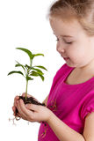 Child holding green plant on white Stock Photo