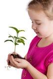 Child holding green plant on white Stock Photo