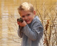 Child holding a large bullfrog stock photography