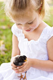 Child holding a little chick Stock Image
