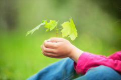 Child holding little green plant in hands Stock Images