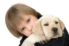 Child holding puppy. Young child holding a Labrador retriever puppy Stock Photo