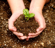 Child holding a seedling in their hands Stock Photos