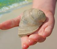 Child Holding Shell. Child holding out seashell with seashore and surf in background Royalty Free Stock Photo
