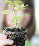 Child holding small new budding plant stock photos