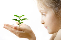 Child holding a sprout Stock Image