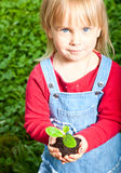 Child holding sprout Stock Photography