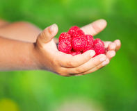 Child holding tasty raspberry Royalty Free Stock Photo