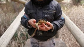 Child holding a toad Royalty Free Stock Photos