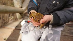 Child holding a toad Stock Photo
