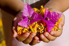 Child holding yellow and purple flowers Royalty Free Stock Photography