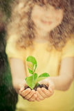 Child holding young plant Royalty Free Stock Photos