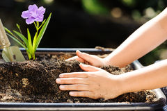 Child holding young plant in hands above soil Stock Images