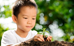 Child holding young plant in hands above soil Stock Photo