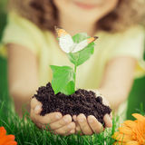 Child holding young plant in hands Royalty Free Stock Photos